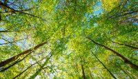 Carbon Management Services